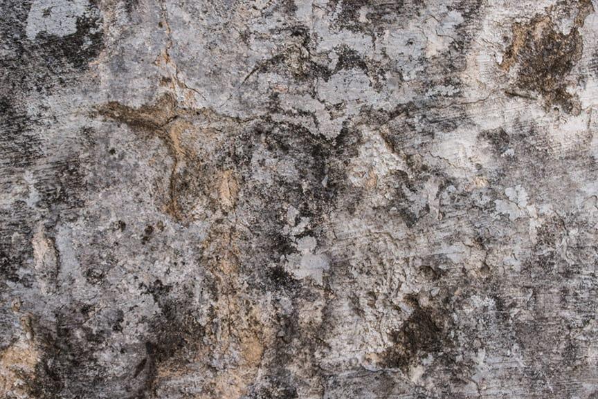 RELIQUIA OLOROSO-1